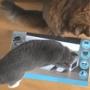コストコ商品の紹介を猫に頼んでみたら・・・