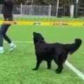 イヌと一緒に「バレーボール」をやってみた。グダグダになってゲームにならない → そんな事はないようです…