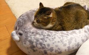 """""""アザラシ""""の上で眠るネコの表情"""
