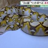 『脱走ニシキヘビ飼い主を5chが名前や顔写真を特定』の画像