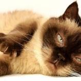 『猫を飼うと喘息が減ることが判明』の画像