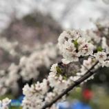 『戸田市4月の市民相談予定が公開されました。』の画像