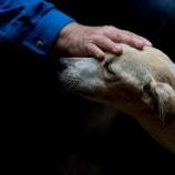 『ベネズエラの犬たち(閲覧注意:泣いてしまう)』の画像
