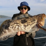 『5月31日 釣果 ロックフィッシュ 54・53・50・50センチ 50UPは4匹 40センチ以上は18匹』の画像
