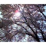 『朝の散歩道�』の画像