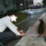 日本では中々見ることのできない、猫とクリスマスの光景