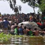 『「戮力協心」世界ゾウの日:洪水で流されたゾウの救出』の画像