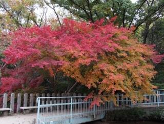 【宝塚紅葉スポット】中山寺でゆっくり紅葉散策しませんか