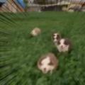 子イヌたちが走ってくる。わ~い♪ → その後ろから、別の何かが追いかけてきました…