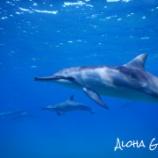 『Aloha Girlsの海ブログ』の画像