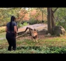 動物園で柵を乗り越え、ライオンの目の前でダンスする黒人女性に非難殺到
