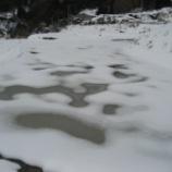 『冬期湛水した田んぼ(試験田)の様子』の画像