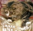 私の可愛い猫ちゃん何処いったの~? → にゃんと!食品工場に住み着き、贅沢三昧で激太りで発見ww
