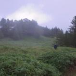 『千頭星山』の画像