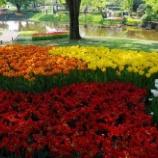 『4月の花⑤』の画像