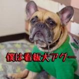 『看板犬アグーの1日に密着!?シャンプー中にお邪魔しました。』の画像
