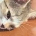 子ネコが窓辺でお昼寝していた。抱き枕、発見にゃ♪ → もう1匹はこうなります…