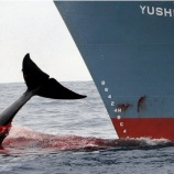 『【署名】日本のクジラを救おう! Save Japan's Whales』の画像
