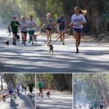 『保護施設の犬たちの散歩』の画像
