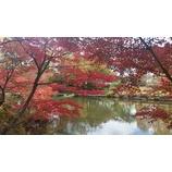 『南下する紅葉』の画像