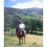 『馬』の画像