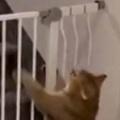 【ネコ】 階段の前にはベビーゲートがあった。2階に行ったろ♪ ダメぇ! → 犬は猫にこうします…