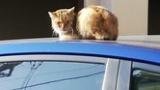 ワイの車にネコ乗っててワロタ(※画像あり)