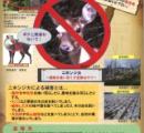 青森県、ニホンジカ全頭射殺へ 「好きなだけ殺してok」