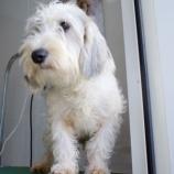 『ワイズドギーの看板犬』の画像