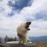 『犬と自然の中へ』の画像