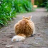 『尻尾曲がりの猫たちと人の貿易の歴史』の画像