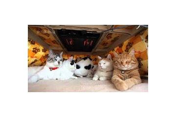 海外「日本人ずるすぎwww」こたつでぬくぬく猫ちゃんがカワイすぎて悶絶する海外