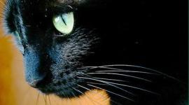 猫がパイロットを襲撃 貨物機離陸中止 犯人は逃走…サウジアラビア
