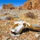 【驚愕】地球の生物さん5回も大量絶滅してたことが判明・・・・