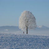 『雪の中を来店してくれるお客様はスゴイの件』の画像