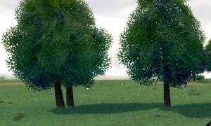 やけに密着している木が発見される