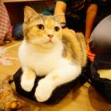 『タイの猫カフェへ潜入!!海外にも猫カフェあるよー!』の画像