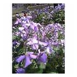 『好きな花の色』の画像