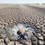 『デイ・ゼロ:オーストラリアの渇水』の画像