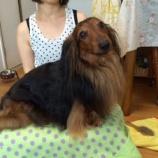 『犬の使命』の画像
