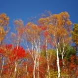 『紅葉の美』の画像