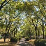 『木陰涼し 秋の気配』の画像