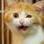 猫って感情ある?