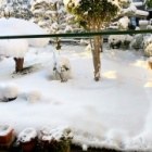 『庭に雪が積もったのであーちゃんは窓から雪を見せたらじっと見ていた!』の画像