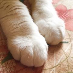 wagicシール式フロアタイル【日本製】で猫の爪対策!フローリング風・石目風の床に
