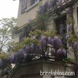『藤の花シロップ』の画像