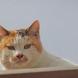 『20180211 【写真】 中山鬼子母神 2 (WX500)※猫多め』の画像