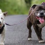 『捨てられた盲目の犬とそのガイド犬』の画像