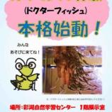 『皮膚の角質を食べてくれるガラ・ルファ(ドクターフィッシュ)体験ができます!7月21日(日曜日)。戸田市立彩湖自然学習センター1階展示室14時から16時まで。』の画像