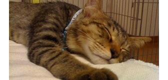 【ねこ】iphoneで撮った猫【iPhone】